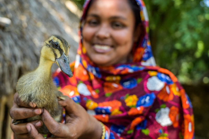 Chicks and ducks give families a new start
